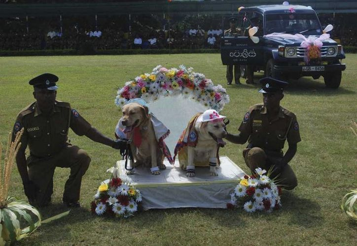Los matrimonios fueron certificados por un funcionario ante un grupo de cirujanos veterinarios, médicos, mandos policiales y el público. (Agencias)