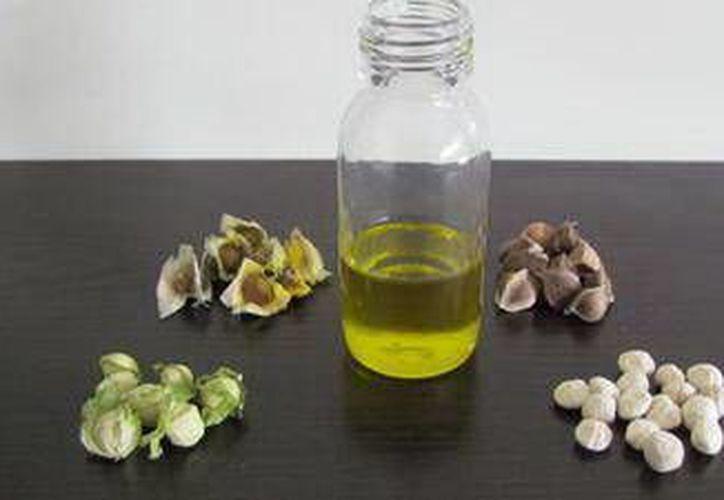 Las moléculas del aceite oléico impide que se acumule en las arterias y cause problemas cardiovasculares. (SIPSE)