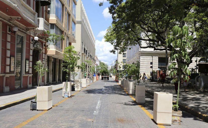Las primeras macetas se han colocado sobre la calle 60 en el tramo comprendido entre las calles 59 y 57 del Centro Histórico.