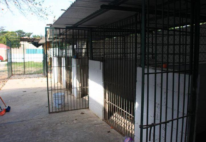 Se destinarán más de seis millones de pesos para el proyecto del Centro de Atención Canina. (Archivo/SIPSE)