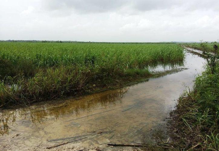Las condiciones de las vías para ingresar y salir con la carga de los ingenios son pésimas, y por ello los productores piden el apoyo. (Edgardo Rodríguez/SIPSE)