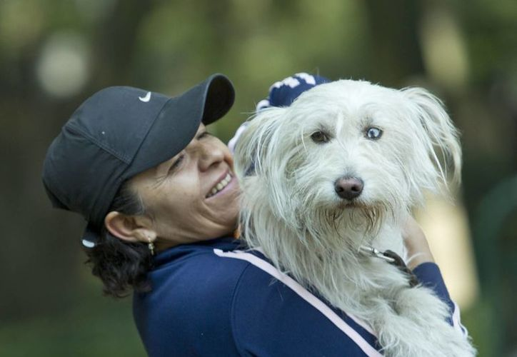 Durante las catástrofes no solo nuestras mascotas sufren sus consecuencias. Las de otras personas pueden extraviarse y/o lesionarse. (Archivo/Notimex)