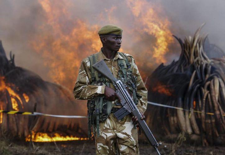 Un responsable del Servicio de Vida Salvaje (KWS) vigila durante la quema de once pilas de marfil en el Parque Nacional de Nairobi, Kenia. (EFE)