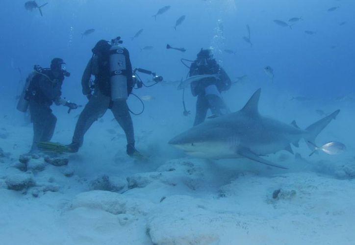 La delimitación para que las embarcaciones no puedan ingresar a la zona de avistamiento de tiburón toro, podría ser rechazada. (Redacción/SIPSE)