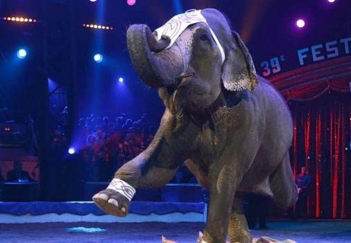 En Alemania se registró la muerte de un hombre tras ser atacado por una elefanta de un circo. Imagen de contexto. (ctvnews.ca)
