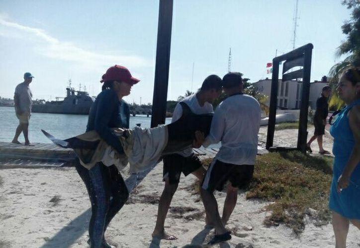 Un delfín de la especie estenella, fue rescatado en playas yucatecas. (Redacción/Milenio Novedades).