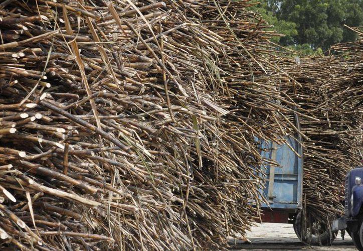 Buscan incrementar hectáreas de caña para instalar ingenio. (Archivo/SIPSE)