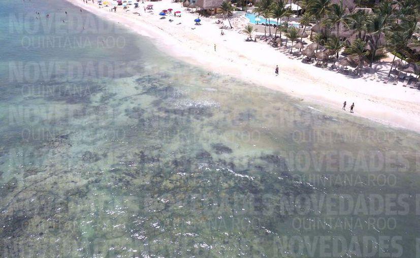 Bañistas locales entrevistados comentaron que estos olores se pueden percibir en el sitio desde la semana pasada. (Octavio Martínez/SIPSE)