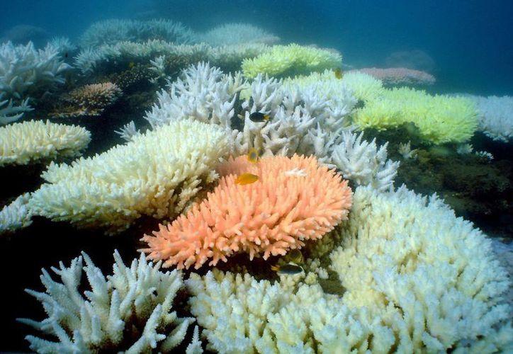Coral blanquecino en la isla de North Keppel en la Gran Barrera de Coral en Queensland, Australia. (Archivo/EFE)