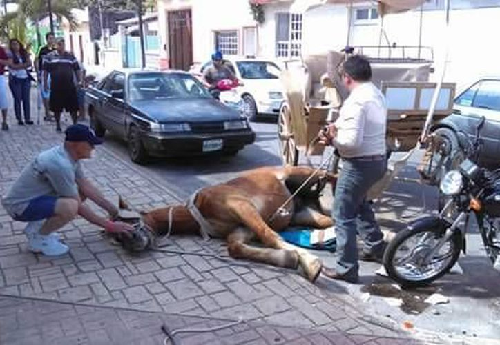La imagen del caballo John, usado para jalar una calesa en Cozumel, desató indignación en Facebook. (Cortesía/Facebook)