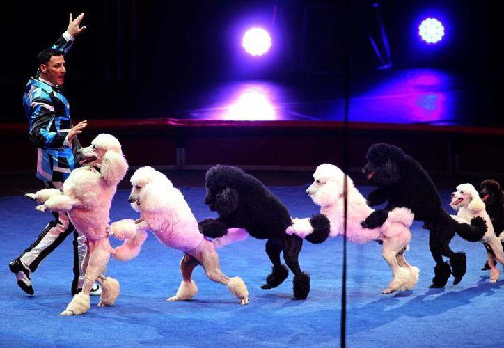 Los legisladores sonorenses argumentaron que los circos someten a los animales a lugares sin luz ni ventilación. (Archivo/Notimex)