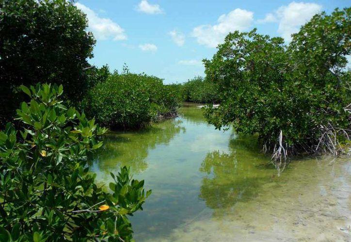 El canal es una entrada  importante del flujo de agua y especies marinas. (Cortesía/SIPSE)