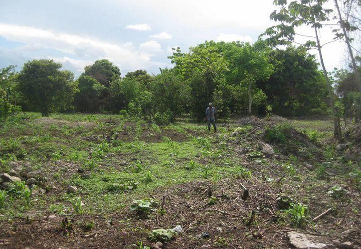 La intensa sequía que está afectando a todo el territorio bacalarense está poniendo en serios aprietos a los ejidatarios. (Javier Ortiz/SIPSE)