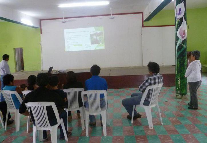 El taller se realizó en las oficinas del Club Social Ejidal. (Raúl Balam/SIPSE)