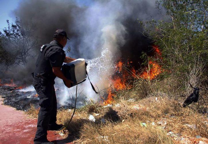 Señalan que los incendios podrían presentarse desde febrero. Imagen de un policía que intenta aplacar el fuego en terreno baldío. (Milenio Novedades)