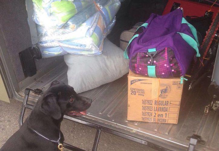 El perro detectó una maleta llena de droga en el área donde se guarda el equipaje de los pasajeros de un autobús del ADO. (Milenio Novedades)