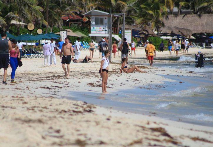 Las playas lucen libres de sargazo, pero se teme un nuevo recale del alga. (Adrián Barreto/SIPSE)