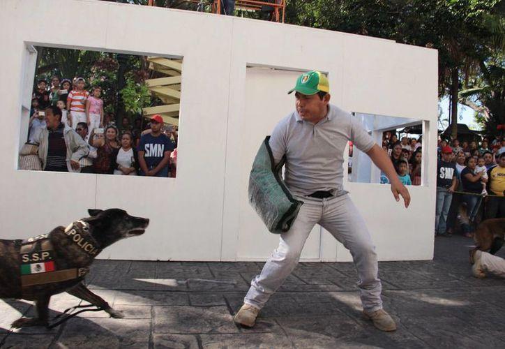 Agentes caninos y los elementos policíacos de la Unidad K-9 de la SSP, los más ovacionados en el desfile del 20 de noviembre. (Jorge Acosta/SIPSE)