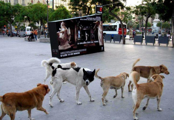 La iniciativa de un pueblo italiano que sanciona los ladridos de los perros busca también mejorar el trato hacia los canes. (EFE)