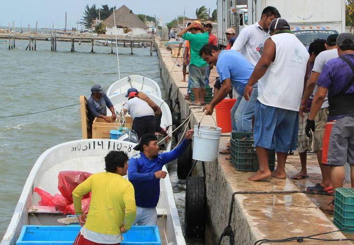 Del 15 de este mes hasta el 15 de marzo se respaldará la inactividad pesquera con 15 millones de pesos. (Milenio Novedades)