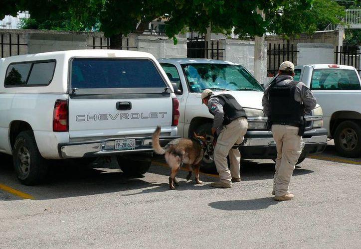 Perros rastrearon artefactos explosivos en el edificio de la OCPY, en Conagua. Este lunes hubo simulacro como parte de las actividades del Día Nacional de la Protección Civil en México. (Cortesía)