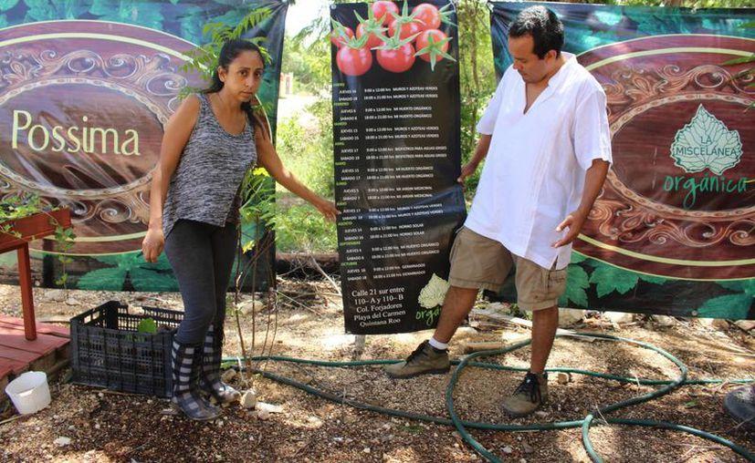 Los biólogos Karla Mondragón y Gustavo Ortiz impartirán un taller sobre técnicas para crear un huerto patios y jardines.  (Luis Ballesteros/SIPSE)