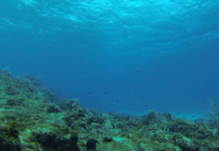 El Parque Nacional Arrecife de Puerto Morelos mantiene riqueza ecológica. (Israel Leal/SIPSE)