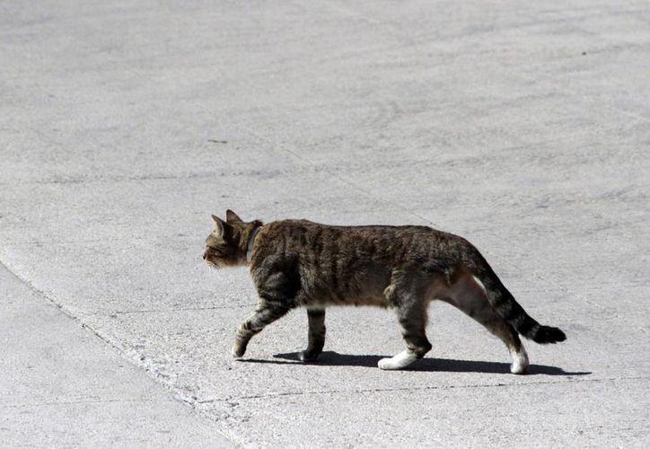 Son trasmitidas por contacto directo o indirecto con cucarachas, ratas, perros y gatos. (Tomás Álvarez/SIPSE)