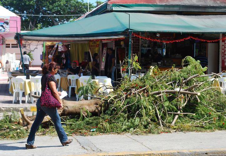 En la avenida Tulum (entre el Kihuic y un restaurante) se encuentra un árbol de flamboyán recientemente talado. (Tomás Álvarez/SIPSE)
