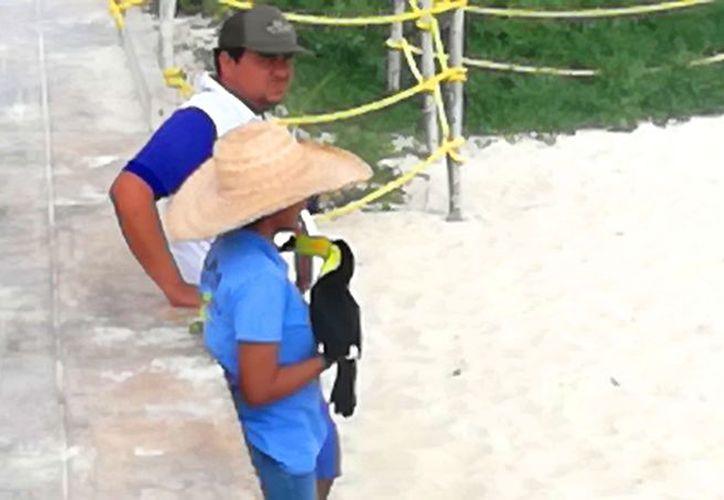 Hoy quedó confirmada la denuncia formal ante la Profepa, por la explotación de tucanes. (Foto: Redacción)