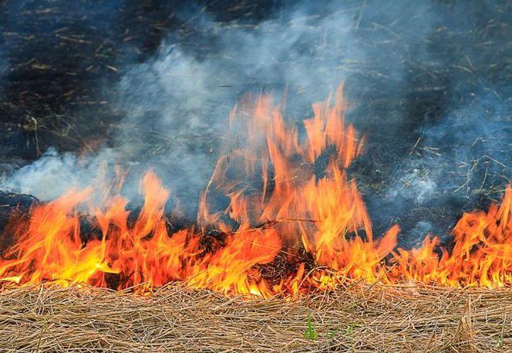 La mujer fue acusada de prender fuego en dos ocasiones a unos fardos de heno. (Alltech)