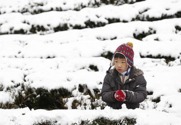 Un niño asiático disfruta de la caída de nieve ligera en una plantación de té en la zona de montaña Pinglin de Nueva Ciudad de Taipei, Taiwán. La inusual nevada ya causó la muerte de al menos 85 personas en esta zona.  (Foto AP / Wally Santana)