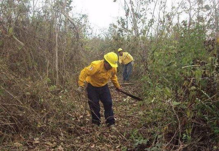 Participan 40 elementos de la Comisión Nacional Forestal y voluntarios. (Cortesía/SIPSE)