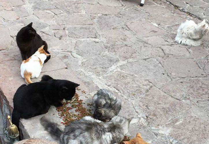 La SSY informó de un operativo especial de vacunación luego de que se detectara un gato con rabia en la colonia Pensiones. (Imagen iliustrativa/ SIPSE)