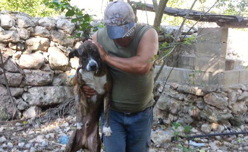 Imagen del dueño de un perro envenenado, al momento de su intento por revivirlo. Hoy por la noche se realizará una reunión de Cabildo en donde abordará la muerte masiva de perros por envenenamiento en Dzindzantún. (SIPSE)