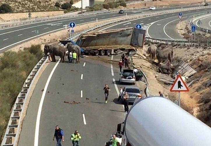 El accidente ocurrió cuando el conductor intentó rebasar a un automóvil. (El Clarín)