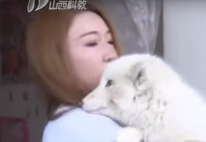 Una joven compró un cachorro spitz japonés en 190 dólares; meses después, describió que era un zorro. (Foto: Captura de pantalla)