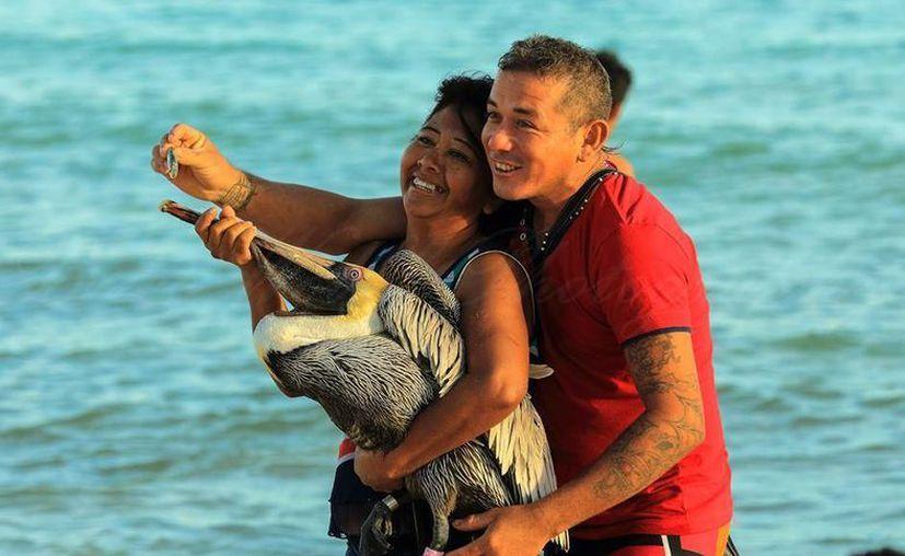 El fotógrafo Brice Wolff captó el momento en el que estas personas posaban con un pelícano en Punta Esmeralda, Playa del Carmen. (Cortesía/Brice Wolff)