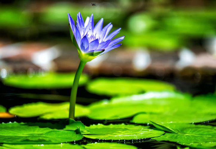 Las plantas pueden percibir las vibraciones sonoras del agua corriente. (Mi Paraiso).