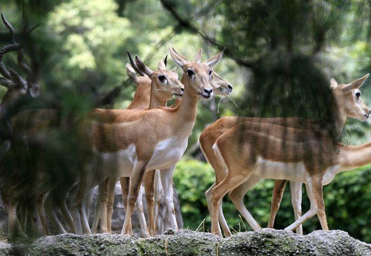 El Zoológico de Chapultepec cumple hoy 92 años de existencia. (Notimex)
