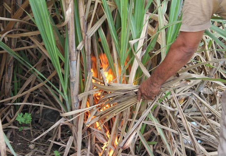 La Profepa participará de cerca en la revisión de incendios forestales de Quintana Roo. (Edgardo Rodríguez/SIPSE)