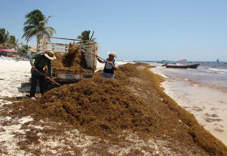 Al menos dos maquinarias trabajaban en la limpieza de playas. (Sara Cauich/SIPSE)