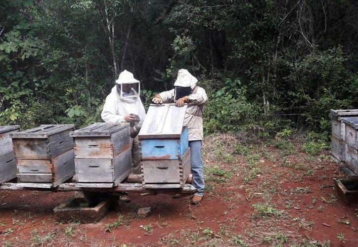Bacalar se ha colocado los últimos años como uno de los principales productores de miel. (Javier Ortiz/SIPSE)