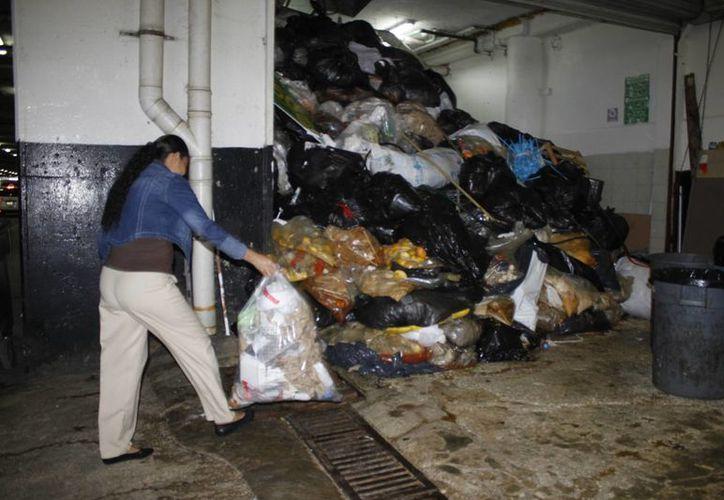 Se perciben malos olores debido a la acumulación de la basura. (Sergio Orozco/SIPSE)