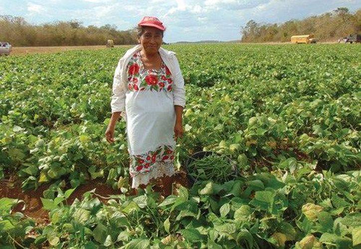 Los productores yucatecos podrán acudir a las ventanillas de atención ubicadas en los cuatro Distritos de Desarrollo Rural. (SIPSE)