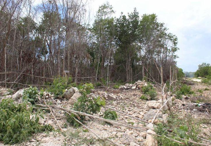 Los lotes que fueron entregados a elementos policíacos de Playa del Carmen no cuentan con servicios básicos. (Octavio Martínez/SIPSE)