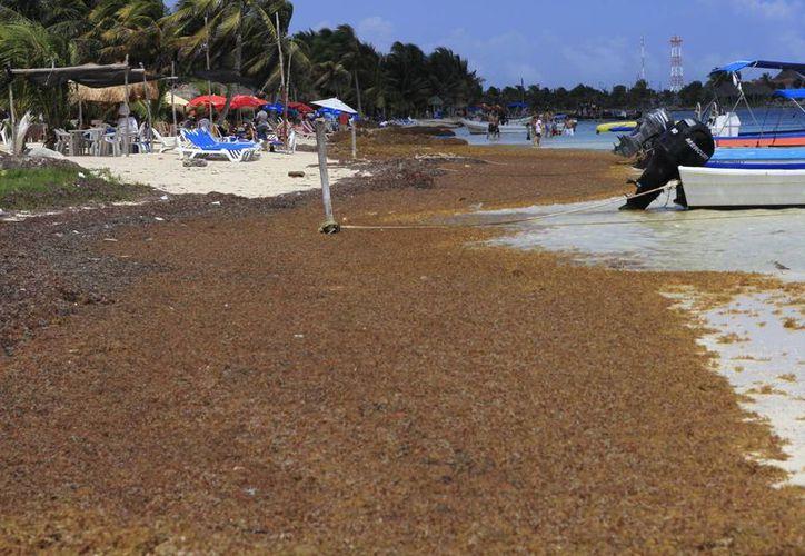 Los expertos analizan las causas del incremento de sargazo en Quintana Roo. (Archivo/SIPSE)