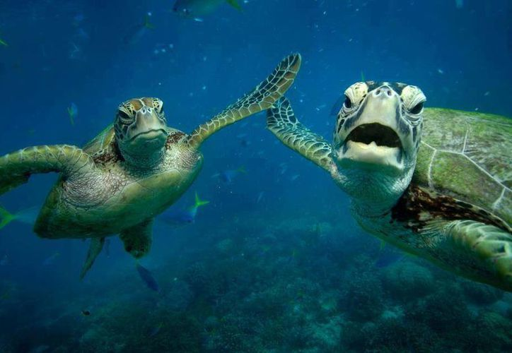 El festival se lleva a cabo con el fin de crear conciencia en la preservación de la tortuga marina. (Contexto/Internet)