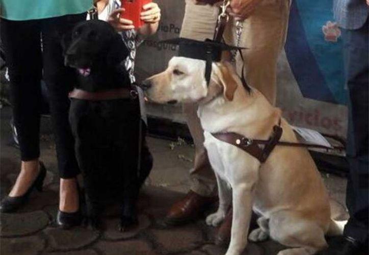 Los perros podrán tener mayor independencia y movilidad durante sus trayectos en la Ciudad de México. (Excelsior)