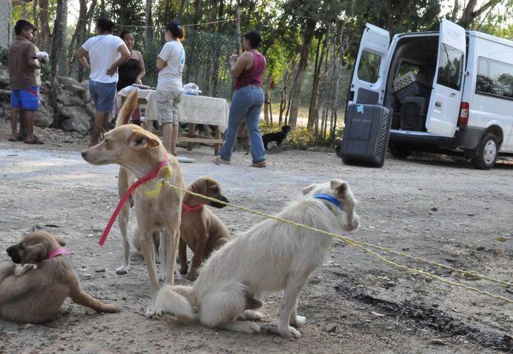 Estudiantes de nivel superior darán pláticas acerca del trato a las mascotas. (SIPSE)